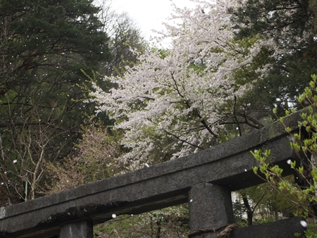 20120503naruko26.JPG