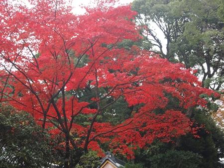 京都ツアー66.JPG