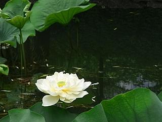 20090826shanhai388.jpg