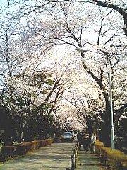 060328_aoyama1.