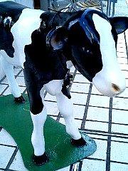 060814_cow