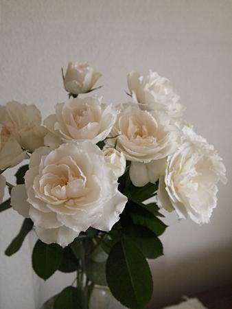 20111113rose11.JPG