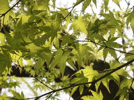 20120503naruko101.JPG