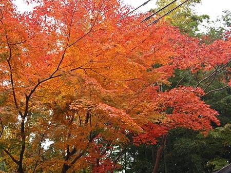 京都ツアー1515.JPG